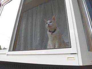 猫も気に入る窓
