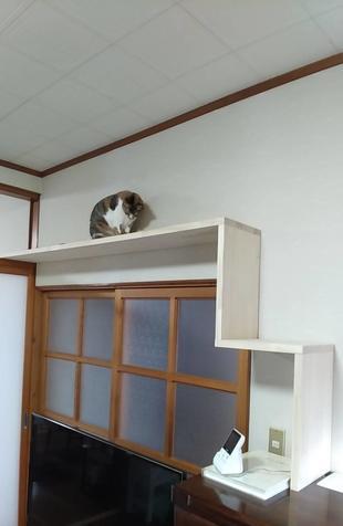 造作棚で愛猫の運動不足解消!
