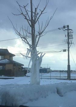 樹氷②.jpg