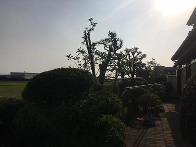 SK様邸庭木④.jpg