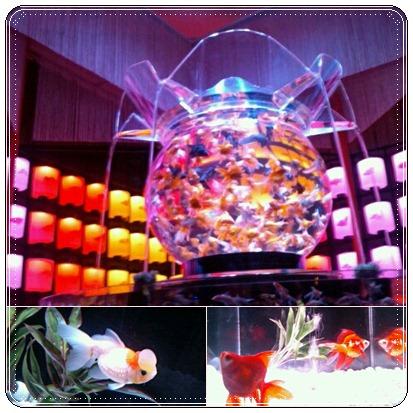 金魚2.jpg