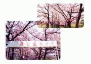 桜まつり4.jpg