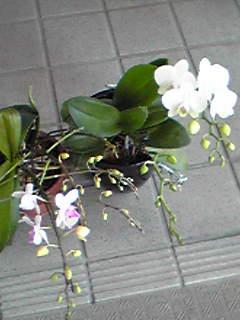 Image068.jpg