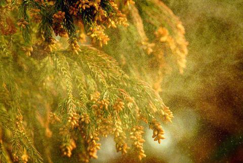 花粉 写真.jpgのサムネイル画像