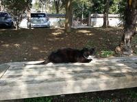 黒白の猫1.jpg
