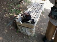 黒白の猫2.jpg