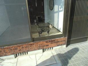 宇佐市ペット用部屋リフォーム 快適な空間