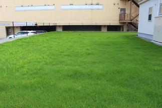 眩しい緑の芝生が心地よい