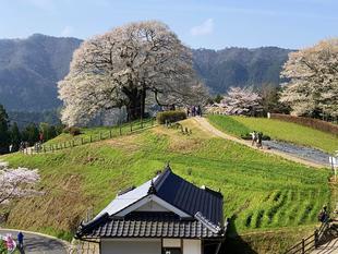 真庭市/醍醐桜そばのゲストハウス勝手口ドア修繕